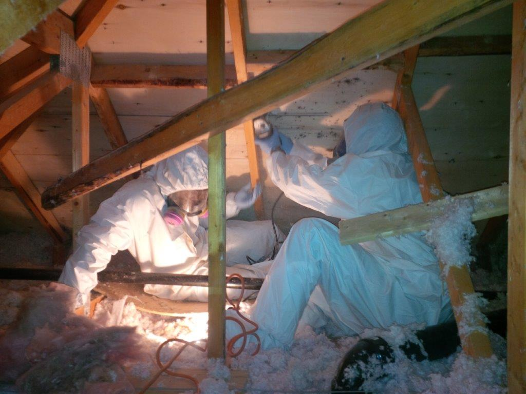 Two mold technicians examining mold growth in the rafters of a Bloomfield attic